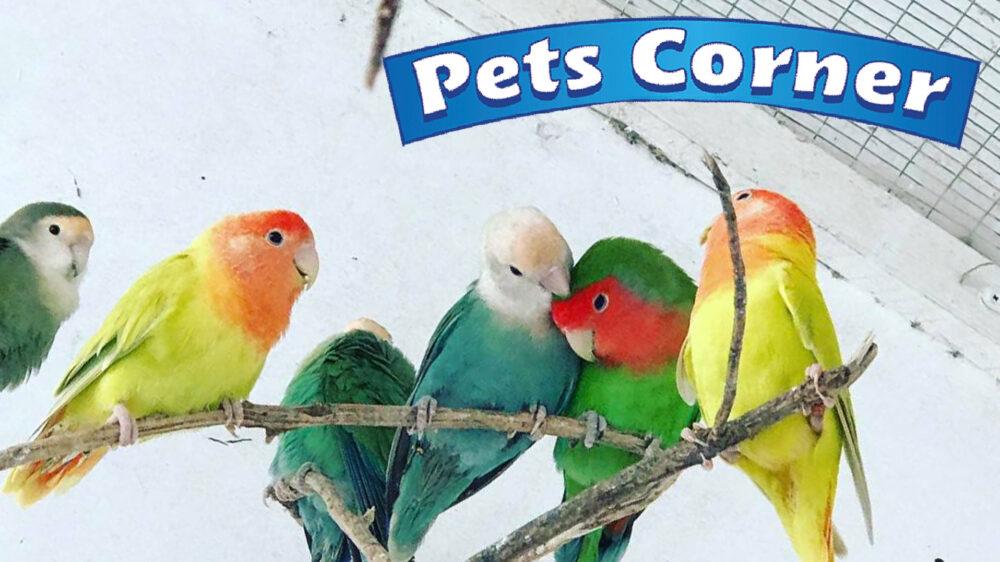 Pets-Corner