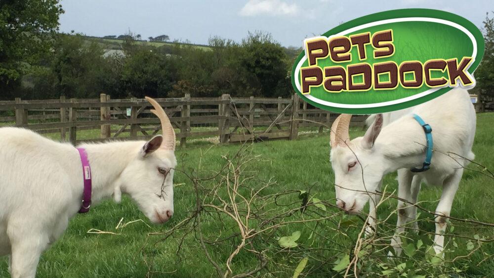 Pets-Paddock